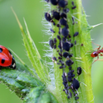 Check out the advantages of organic pest control
